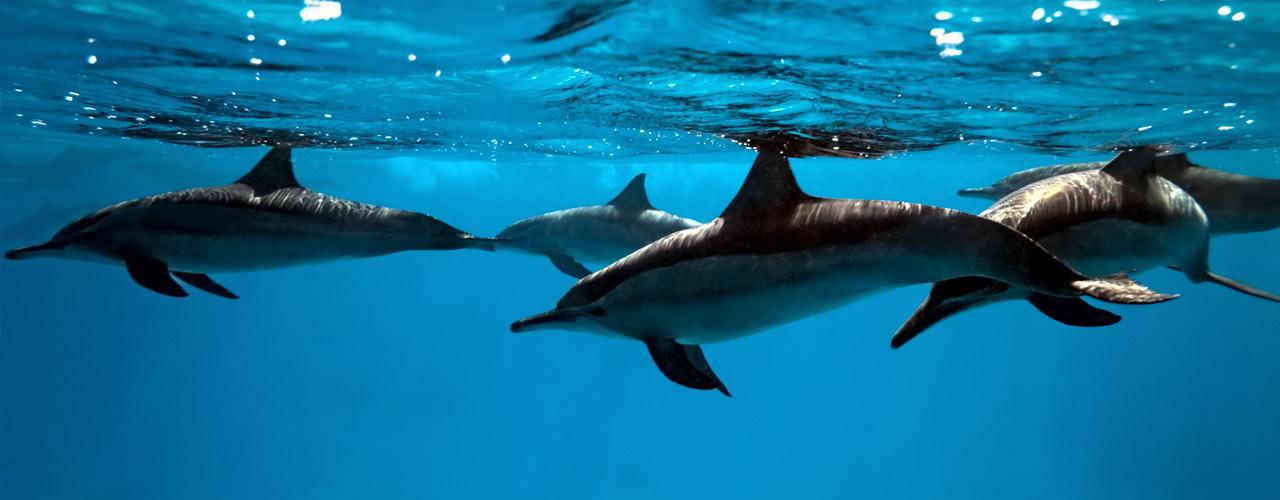 dolphin-watch-sol-resorts-vilankulo